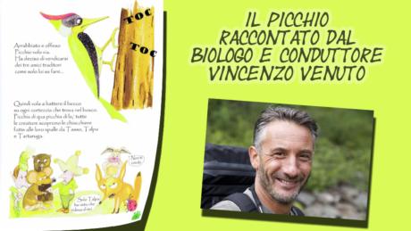 picchio 3